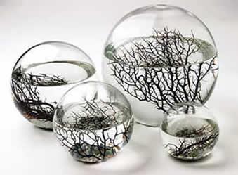Ecoesferas