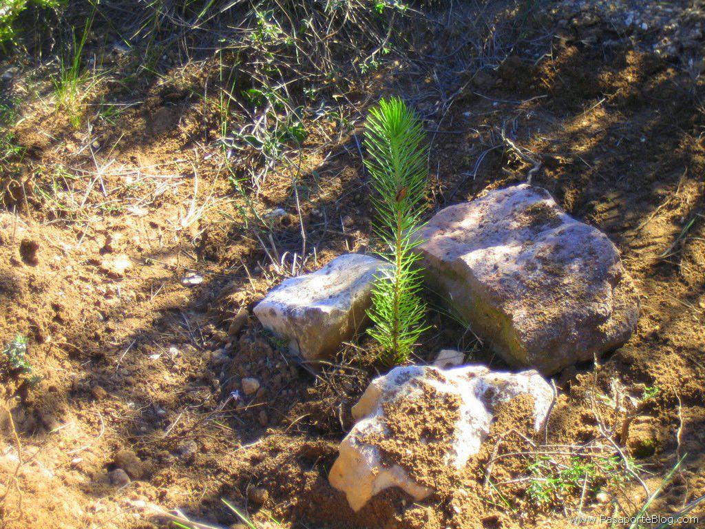 reforestacionyw_2007_0022.jpg